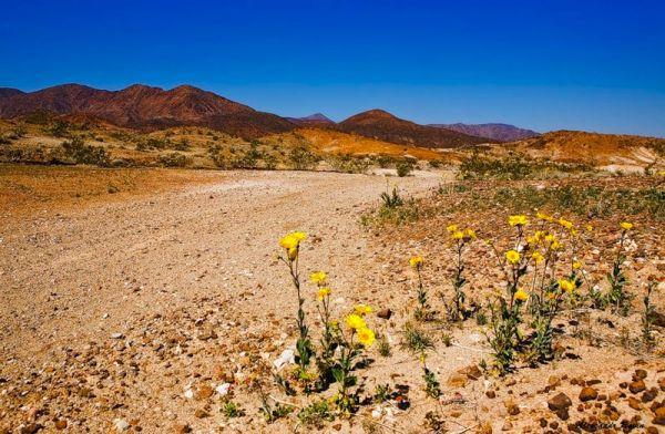квіти в пустелі