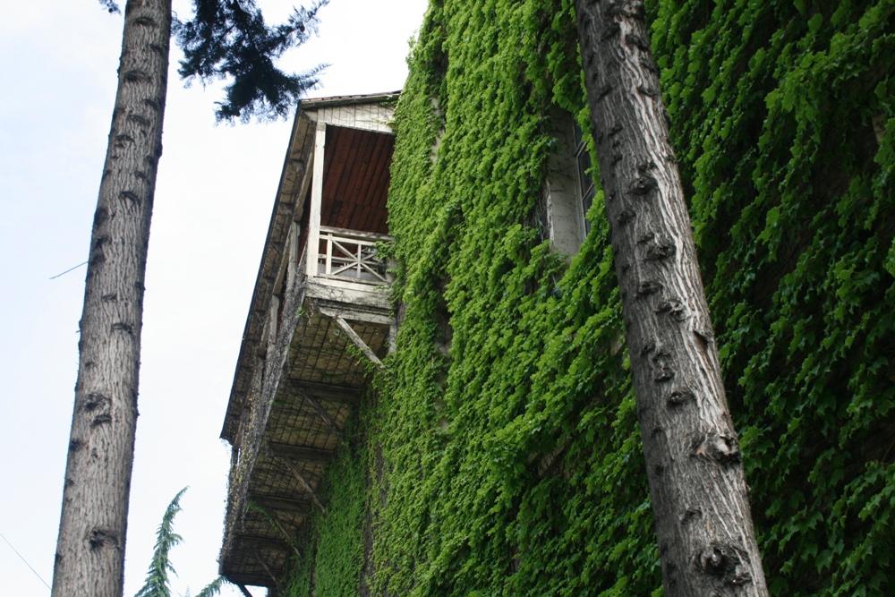 зелений  дім