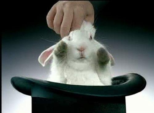кролик із капелюха