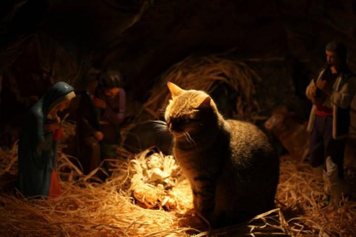 Коти і вертепи