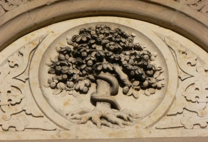 дерево пізнання