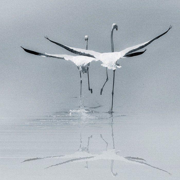 птахи пара