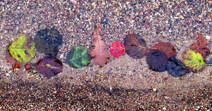 листочки осінь