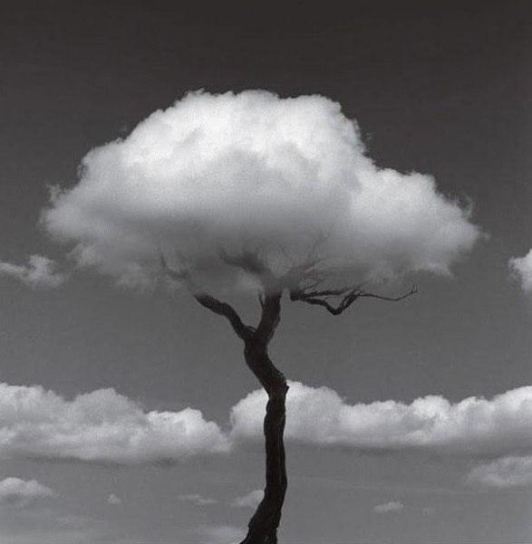 дерево старість